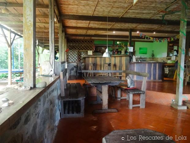 Materiales para el diseño y la decoración- el bambú-17